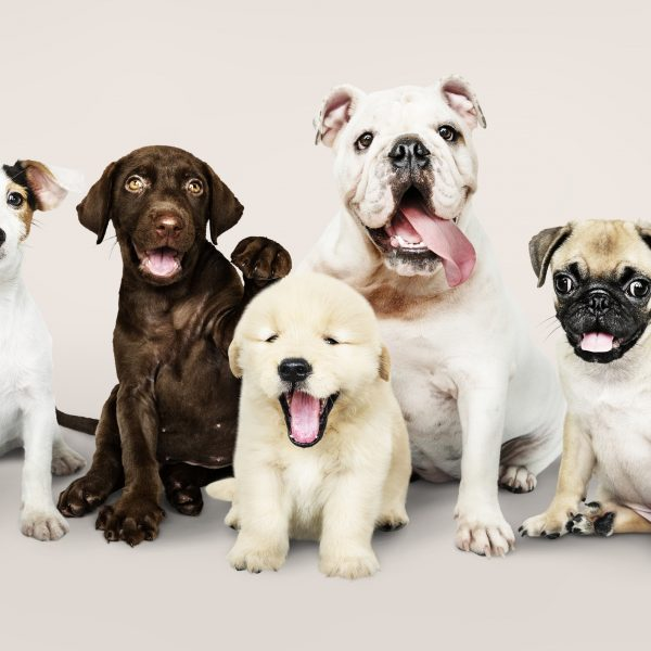 Life is Dog - Dog Training and Walking Website